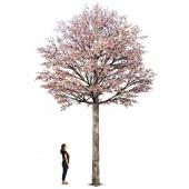 HUGE 26FT Tall Cherry Blossom Tree - Permanent Install - Custom Colors Available